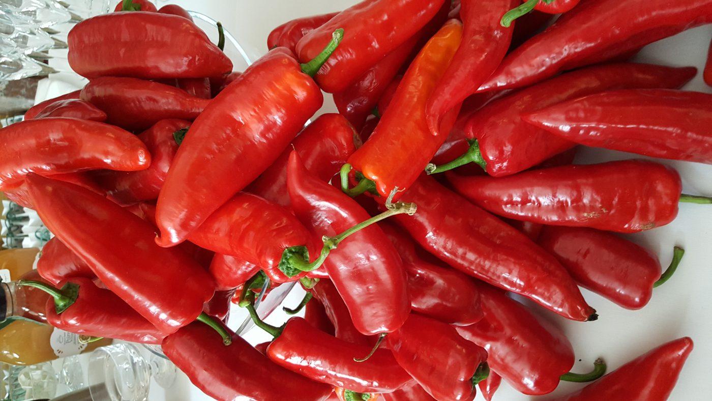 Les poivrons rouges de la montagne de Kopaonik(c)MF Souchet