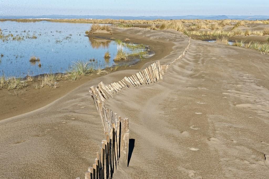 La sauvage plage de l'Espiguette(c)Dominique Demouy