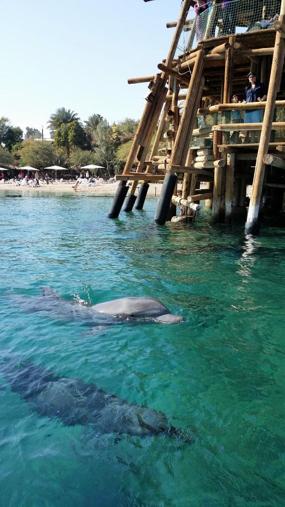 Dolphin reef (c)B.Charton