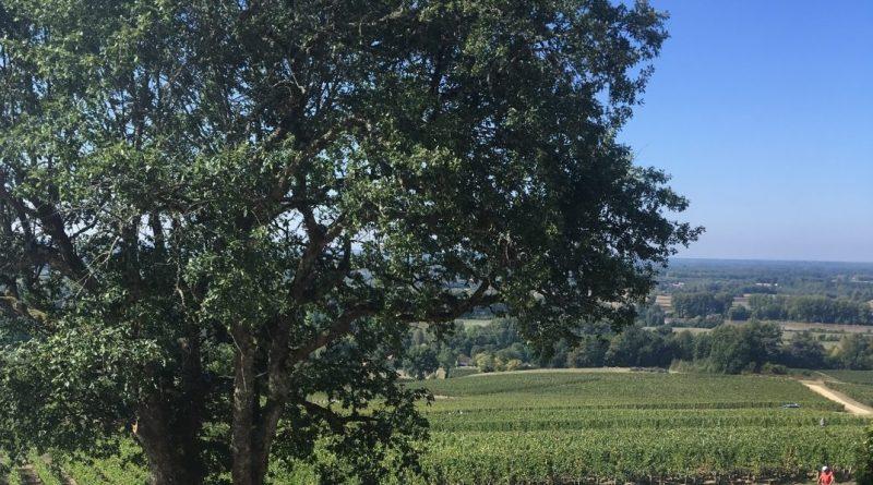 CHÂTEAUREAUT, une pépite viticole en Cadillac Côtes de Bordeaux