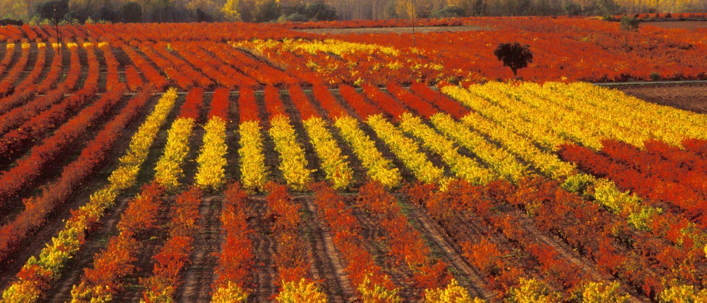 Les majestueuses Routes des Vins en Terre de Rioja