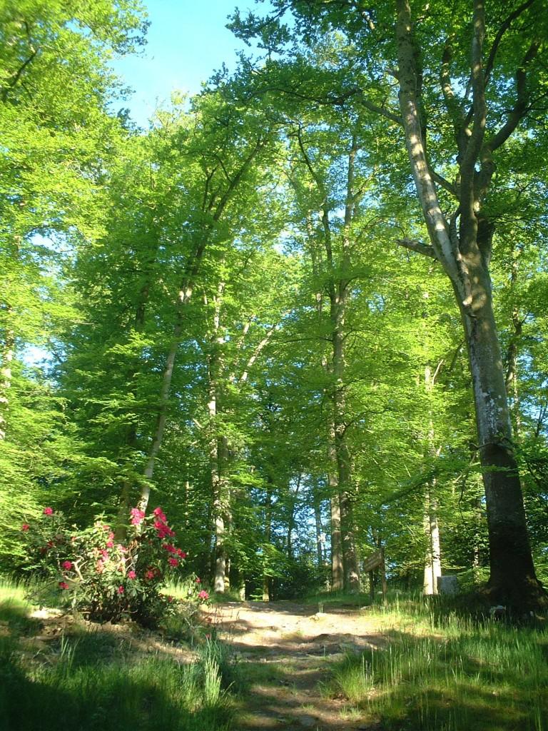 La forêt (c)OT Bagnoles de l'Orne
