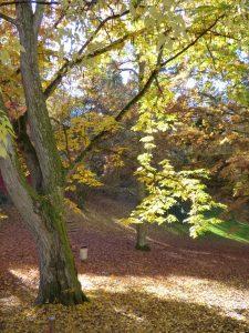 Les vertus des arbres(c)OT de Néris-les-Bains